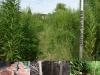 Bestemming, kersenhout, 2009